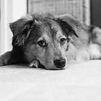 Adopt A Pet :: Bodie - Orange, CA