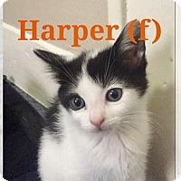 Adopt A Pet :: Harper - Island Park, NY
