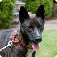 Adopt A Pet :: Bingham - Hopkinton, MA