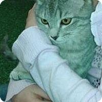 Adopt A Pet :: Natalie - Harrisburg, NC