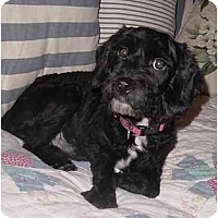 Adopt A Pet :: Corey - Sugarland, TX