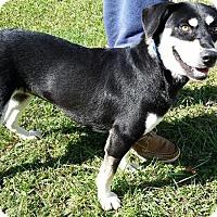 Adopt A Pet :: Pearle - Jacksboro, TN