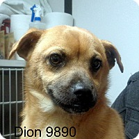 Adopt A Pet :: Dion - Greencastle, NC