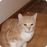 Adopt A Pet :: Rudy - Solebury, PA
