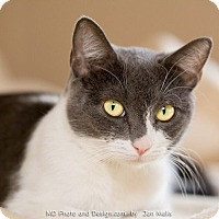 Adopt A Pet :: Bree - Fountain Hills, AZ
