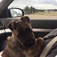 Adopt A Pet :: rigby - EDEN PRAIRIE, MN