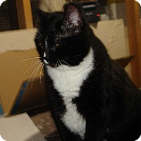 Adopt A Pet :: Beckie - Overland Park, KS