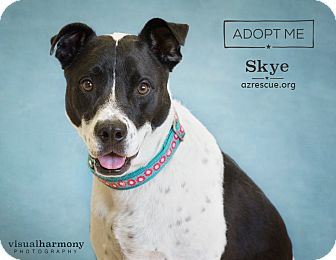 Australian Shepherd Mix Dog for adoption in Phoenix, Arizona - Skye