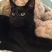 Adopt A Pet :: Lucky 100 - Plainville, MA