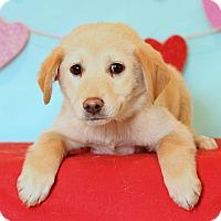 Adopt A Pet :: Elsa - Waldorf, MD