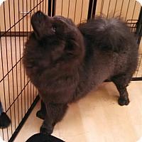 Adopt A Pet :: Blue Bell - Scottsdale, AZ