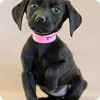 Adopt A Pet :: China - Waldorf, MD