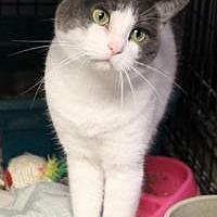 Adopt A Pet :: John and Dani - Yukon, OK