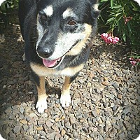 Adopt A Pet :: Chubby - Buckeye, AZ