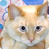 Adopt A Pet :: Nilsson - Wildomar, CA