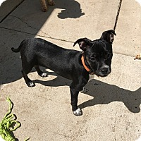 Adopt A Pet :: Maddie - Sinking Spring, PA