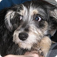 Adopt A Pet :: Teddy (7 mo 14 lb) - Blakeslee, PA