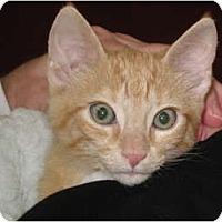 Adopt A Pet :: Ruby - Port Republic, MD