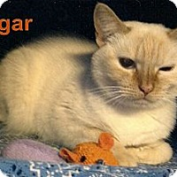 Adopt A Pet :: Sugar - Medway, MA