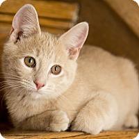 Adopt A Pet :: Kenji - Chicago, IL