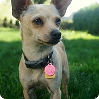 Adopt A Pet :: Doobie - Salem, OR