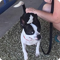 Adopt A Pet :: Blaze - Weatherford, TX