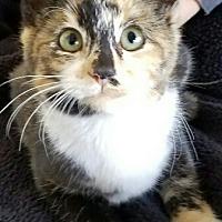 Adopt A Pet :: Darla - Monrovia, CA