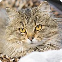 Adopt A Pet :: McKenna - Fargo, ND