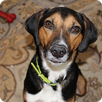 Adopt A Pet :: Jethro - Bowie, MD