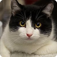 Adopt A Pet :: WRIGHT - Houston, TX