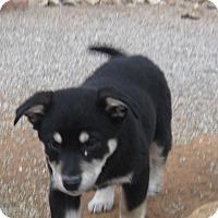 Adopt A Pet :: Panda - Tucson, AZ