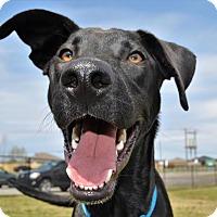 Adopt A Pet :: *Artemis - PENDING - Westport, CT