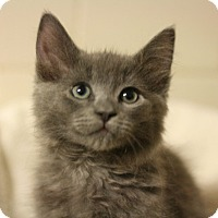 Adopt A Pet :: Kyrie - Canoga Park, CA