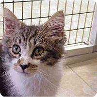 Adopt A Pet :: Bimini Cricket - Deerfield Beach, FL