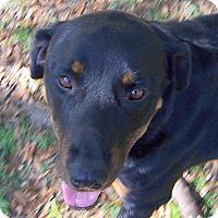 Adopt A Pet :: Luna - Ravenel, SC
