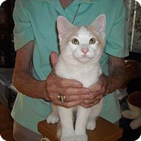 Adopt A Pet :: Izzy & Ozzy - Riverside, RI