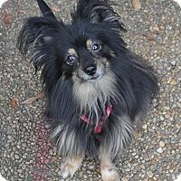 Adopt A Pet :: Kirby - Atlanta, GA