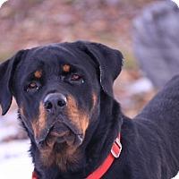 Adopt A Pet :: Dunca - Polson, MT