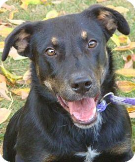 German Shepherd Dog Mix Dog for adoption in Red Bluff, California - Robby