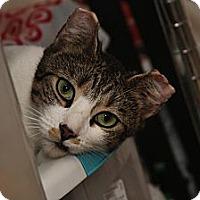 Adopt A Pet :: Lady Mary - New York, NY