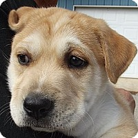 Adopt A Pet :: Scorpio - Danbury, CT
