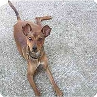 Adopt A Pet :: Tiki - Nashville, TN