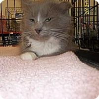 Adopt A Pet :: Charlotte - Riverside, RI