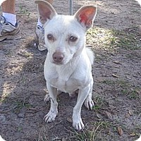 Adopt A Pet :: Castro - Brooksville, FL