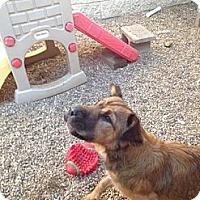 Adopt A Pet :: Camille - Stilwell, OK