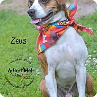 Adopt A Pet :: Zeus - Lincoln, NE