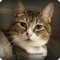 Adopt A Pet :: Summer - Springfield, PA