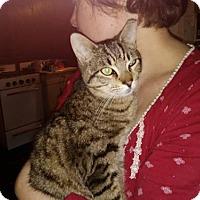 Adopt A Pet :: Georgie - Montclair, NJ