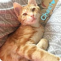 Adopt A Pet :: Cheeto (Video) - York, PA