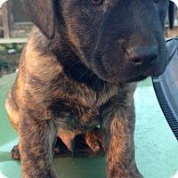 Adopt A Pet :: Rock - Louisville, KY